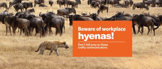 Workplace Hyenas